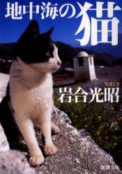 地中海の猫